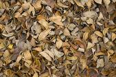 сушеные коричневый осенние листья — Стоковое фото