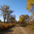 Stock Photo: Autumn sunny day on wood road