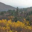 Far East taiga in the autumn — Stock Photo