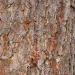 Background from a bark of Far East cedar — Stock Photo