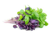 Fresh green and purple sweet basil bunches — Stock Photo