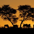 Tree and wildebeest silhouette - Stock Photo