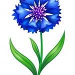 Blue cornflower — Stock Vector #7628440