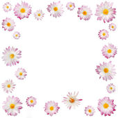 Frame of pink chrysanthemums isolated on black — Stock Photo