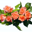 Pink roses isolated — Stock Photo