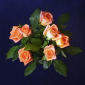 Beautiful roses isolated on black — Stock Photo