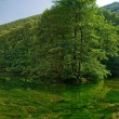 Lake in pure nature - Stock Photo