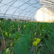 greenhouse — Stock Photo #7946038