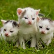 Black and white kittens — Stock Photo