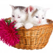 Two kittens sitting in basket — Stock Photo
