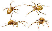 Spiders collection — Stock Photo