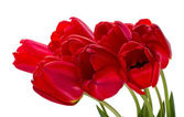 Red tulips bouquet — Stock Photo