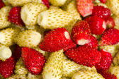 Wild strawberries background — Stock Photo