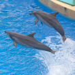 Bottlenose dolphin — Stock Photo #7679380