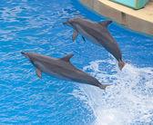 Bottlenose dolphin — Stockfoto
