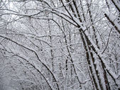 Snowcovered branches in winter forest — Stock Photo