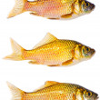 Royalty-Free Stock Photo: Set of three gold carps