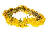 Gelbe huflattich garland isoliert auf weiss — Stockfoto