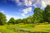 Overgrown pond landscape — Stock Photo