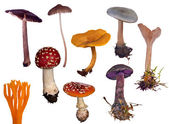 Set of different toadstools on white — Stock Photo