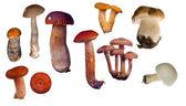 Zbiór grzybów jadalnych — Zdjęcie stockowe