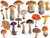 Nineteen mushrooms collection isolated on white — Stock Photo