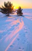 Sonnenuntergang mit zwei pinien und schritte auf schnee — Stockfoto