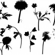 Wild flowers silhouettes isolated on white — Stock Vector