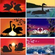 Swans wildlife collection — Stock Vector