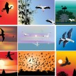Stock Vector: Nine compositions with flying birds