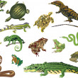 Set of reptiles and amphibians isolated on white — Stock Vector