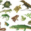 Stock Vector: Set of reptiles and amphibians isolated on white