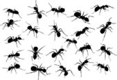 Twenty two ant silhouettes — Stock Vector