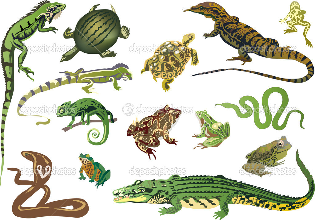 Set of reptiles and amphibians isolated on white — Stock ... 10 Examples Of Reptiles