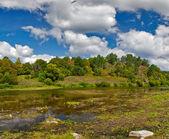 Sığ nehir orman kenarında — Stok fotoğraf