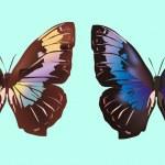Two dark butterflies on blue — Stock Vector #7199439