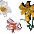 Royalty-Free Stock Vector Image: Three color lily flowers isolated on white