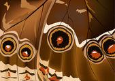 Bruine vlinder vleugel achtergrond — Stockvector
