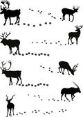 Deers and its tracks isolated on white — Stock Vector