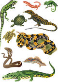 Collection of reptiles and amphibians — Stock Vector