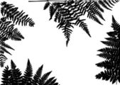 Black fern frame composition — Stock Vector
