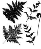 Set di sagome di felce isolato su bianco — Vettoriale Stock