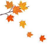 Orange autumn maple tree branch — Stock Vector