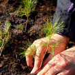 Planting young tree — Foto Stock