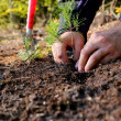 Planting a new tree — Stock Photo #7328437