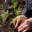 Stock Photo: Planting tree