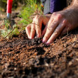 Planting tree — Stock Photo