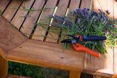 Secateurs garden — Stock Photo