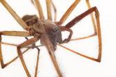 Aranha isolada — Foto Stock
