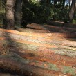 Stock Photo: Sawn wood in forest